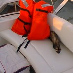"""Bouncer"" checking the life jackets."