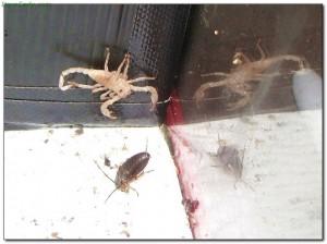 scorpions14