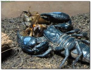 scorpions22