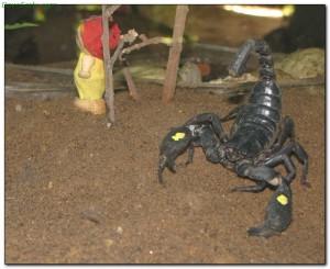 scorpions29