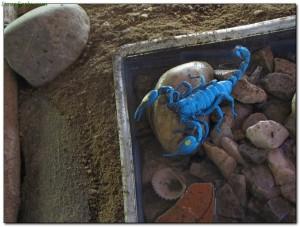 scorpions31