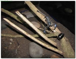 scorpions34