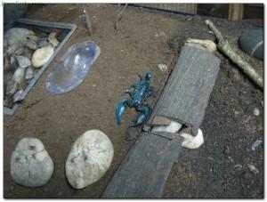 scorpions35
