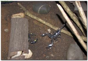 scorpions38