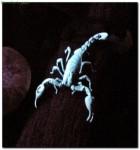 scorpions39